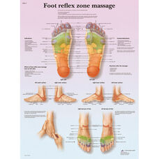 Foot Massage Reflex Zone Anatomical Laminated Chart - 20