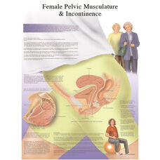 Female Pelvic Musculature and Incontinence Anatomical Paper Chart - 20