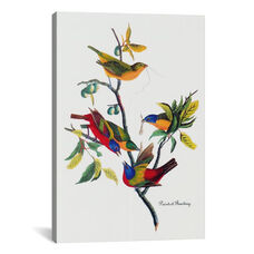 Painted Bunting by John James Audubon Gallery Wrapped Canvas Artwork