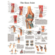 Knee Joint Anatomical Laminated Chart - 20