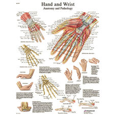 Hand and Wrist Anatomical Paper Chart - 20
