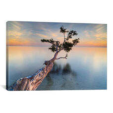 Water Tree XIV by Moises Levy Gallery Wrapped Canvas Artwork
